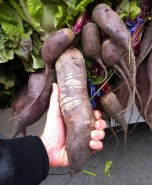 So here's a beet that's of impressive size